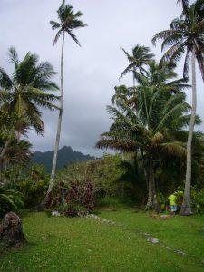 Inland Rarotonga, Pacific Islands