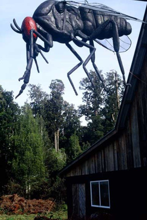 Large model sandfly above a cafe in Pukekura, New Zealand. You definitely need insect repellents when going anywhere with sandflies!