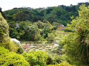 Lady Norwood Rose Garden at Wellington Botanic Garden
