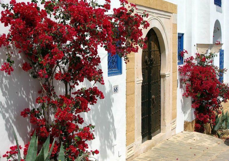 Sidi Bou Said – an enchanting taste of coastal Tunisia