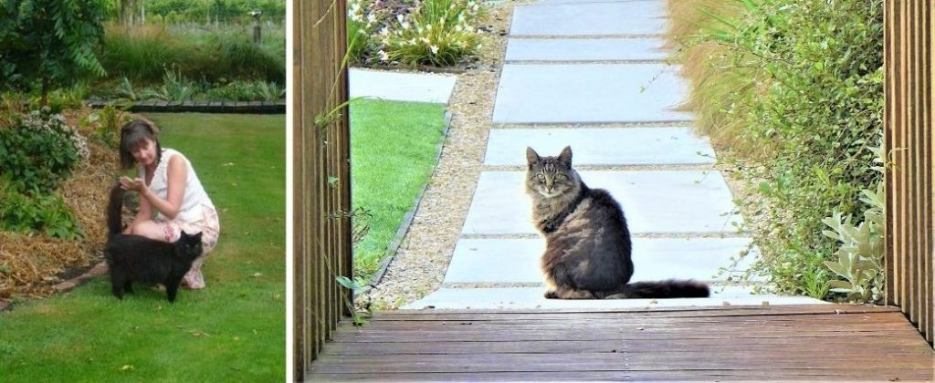 Cats in the grounds of resorts in New Zealand