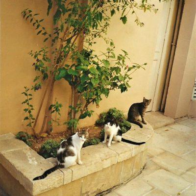 Cats abroad – my favourite travel buddies