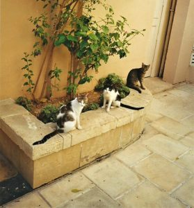 Cats at the Corinthia Palace Hotel Malta