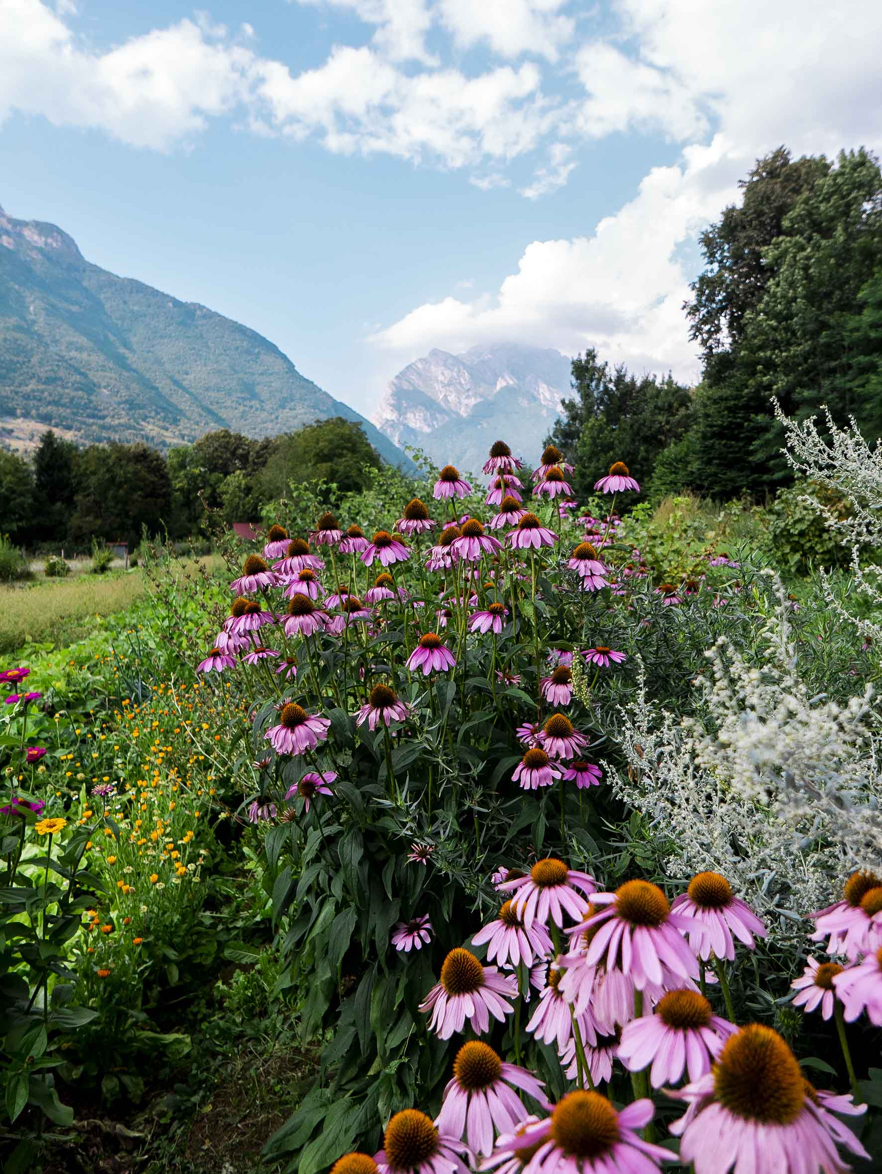'Wildflower' - Trenta, Slovenian Alps by Melissa Butters Photography