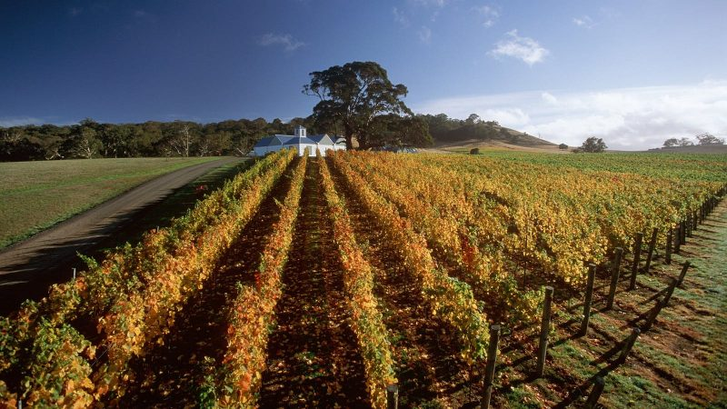 Hanging Rock Winery in Macedon Ranges - a great stop if you're wine touring in Victoria