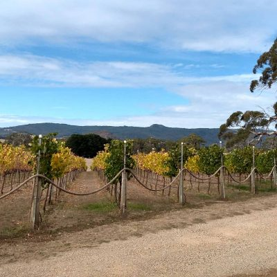 View of Yarra Valley vineyard