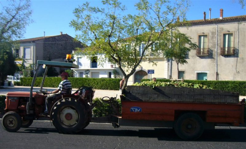 Trucks carrying harvested grapes around Marseillan France
