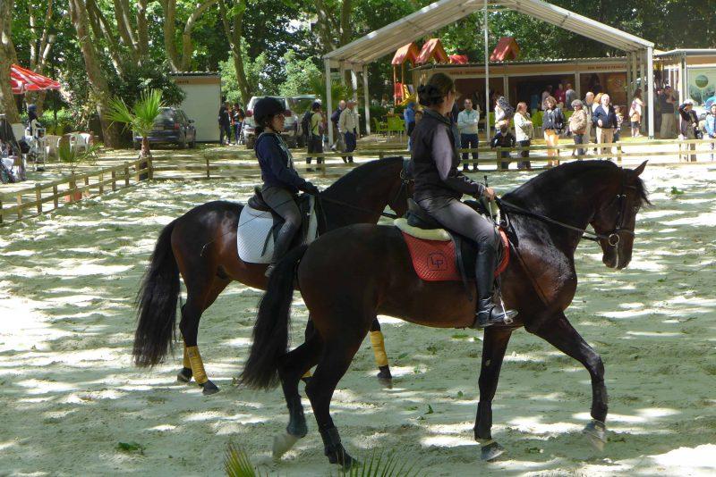 Equestrian event in the Dom Carlos I Park, Caldas da Rainha, Portugal