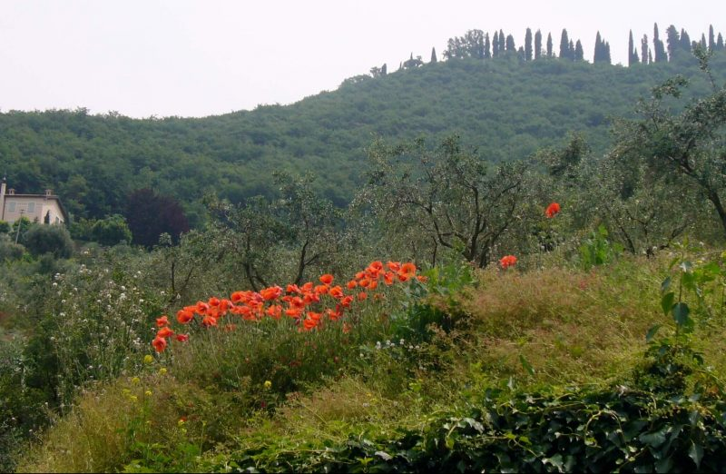 Countryside around Lake Garda - poppies and trees on the hillsides